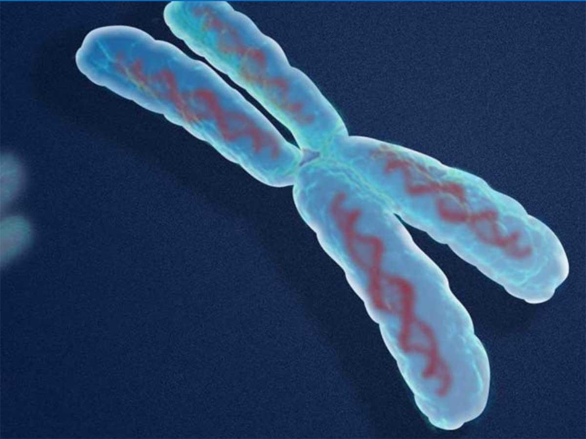 Servizi di genetica molecolare